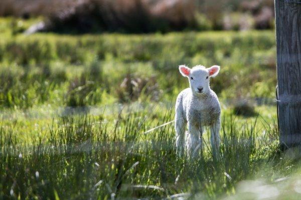 Bárányhimlő felnőttkorban- Ezt mindet tudnod kellene a bárányhimlőről-5.rész